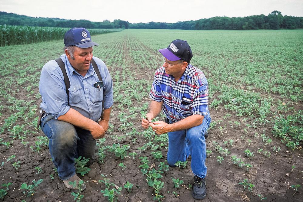 Kansas, USA - K State extension agent Dean Davis and farmer Dan Daniel examine crops and facilities at Daniel's farm near Topeaka.