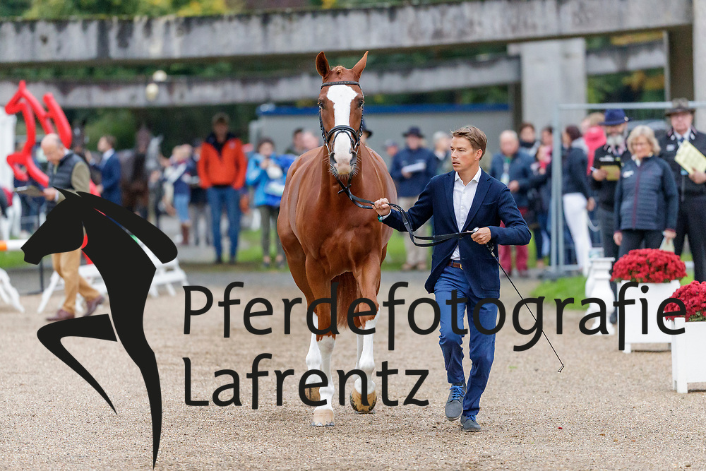LIPS Tim (NED), HERBY<br /> Le Lion d'Angers - FEI Eventing World Breeding Championship 2019<br /> Holding Box<br /> 2. Verfassungsprüfung<br /> 20. Oktober 2019<br /> © www.sportfotos-lafrentz.de/Stefan Lafrentz