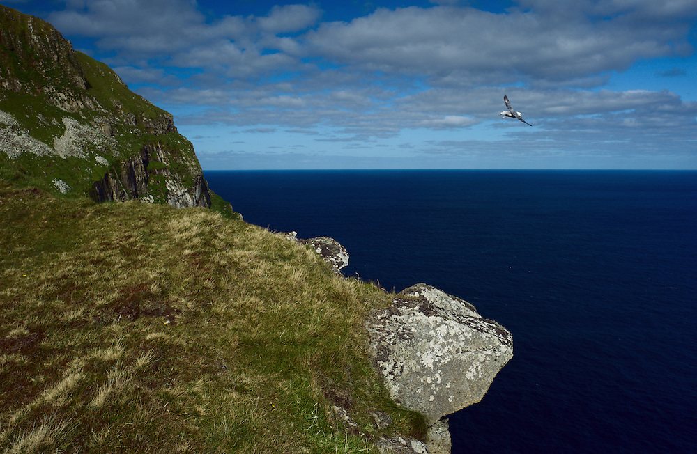 Fulmar flying over the edge of The Gap, St. Kilda