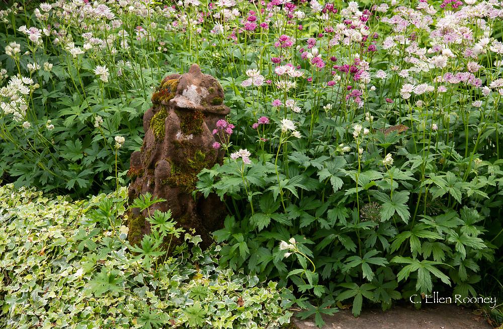 Astrantia around a stone sculpture in the Stockton Bury Gardens, Kimbolton, Leominster, Herefordshire, UK