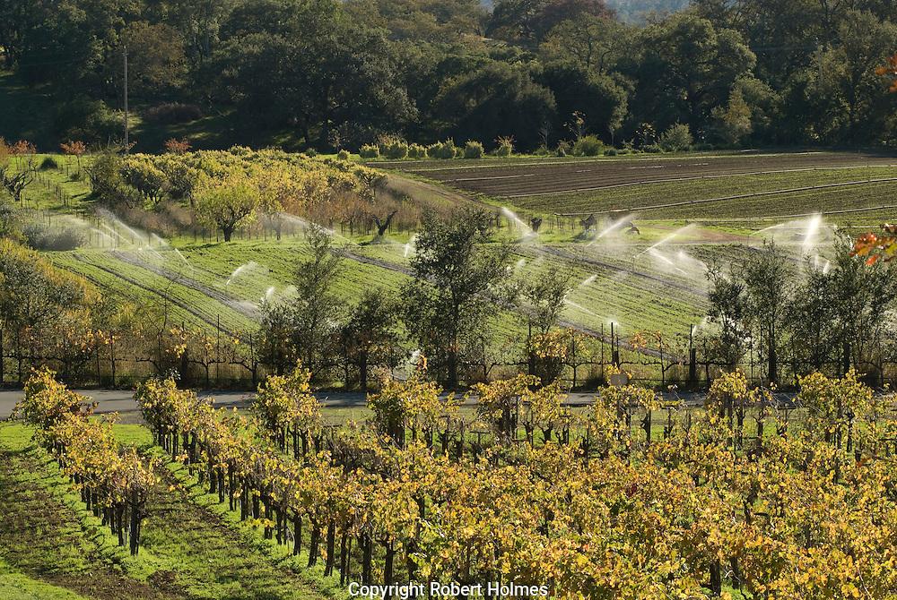 Sonoma Valley vineyards, California
