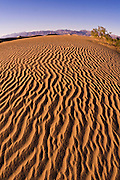 Evening light on dune patterns, Mesquite Flat Sand Dunes, Death Valley National Park. California