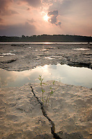 Fossil Beds, Falls of the Ohio State Park, Indiana