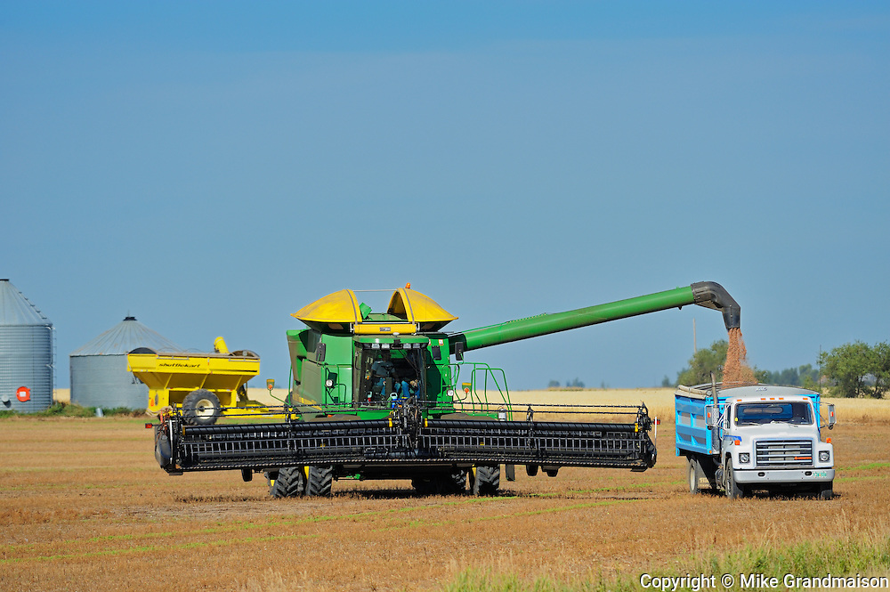 Lentil harvest. Combine and farm truck<br /> Land<br /> Saskatchewan<br /> Canada