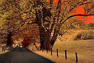 Faux color infrared of Sparks Lane, Cades Cove, Smokies, TN
