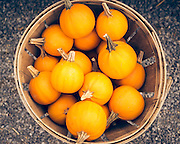 A basket of small sugar pumpkins.