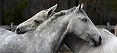 horses, just horses