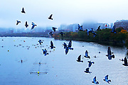 Pigeons  fly across the Charles River as participants make their way to the start of the course during Day 1 of The 52nd Head of the Charles Regatta on October 22, 2016 in Cambridge, Massachusetts.