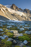 Glaciated Peaks of Boulder/Salal Divide with rocky meadows near Athelney Pass, Coast Range British Columbia Canada
