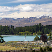 Sheep are herded during the New Zealand Farming and Horticulture, Sheep Sales, at Lake Tekapo in Mackenzie Country, South Island, New Zealand. 24th February 2011, Photo Tim Clayton.