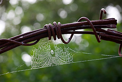 Cobweb and dew on the metal arch
