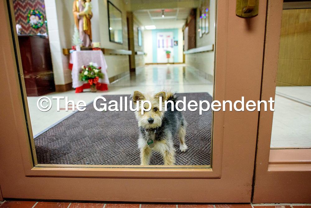 Maxie stands guard at the front door of Little Sisters of the Poor in Gallup Tuesday.