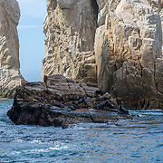 Sea lion colonyby The Arch. Cabo San Lucas. BCS. Mexico.