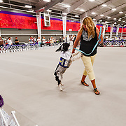 The photography was made during the 2015 Engliish Springer Spaniel Field Trial Association (ESSFTA) Rescue Parade.  The event took place, Thursday, September 26th, at Purina Farms, in Gray Summit, MO.