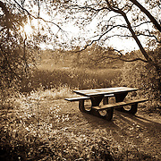 Picnic Bench in Lake Natoma Rec Area, Folsom, CA