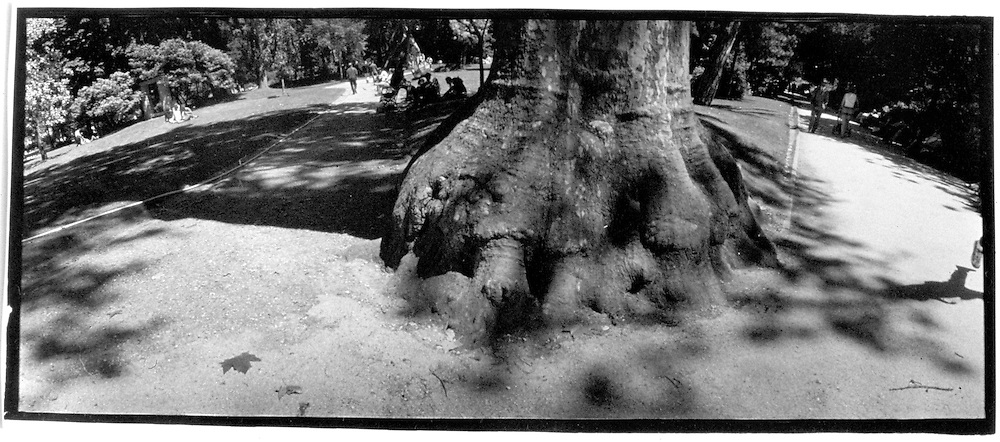 "15742        Photos: Margaret McAdams: ?Paris Parks; Parc de Monceaum? :""Savernake Forest, Wiltshire"""
