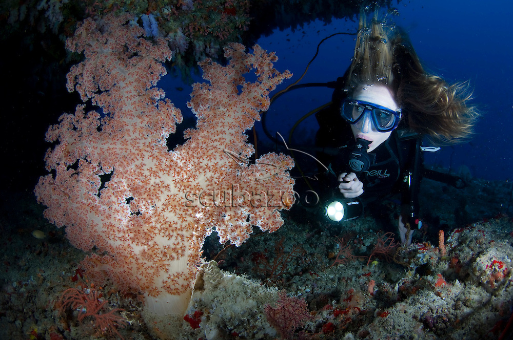 Diver with torch looking at a Dendronephthya  Soft Coral growing under ledge, profile, front view, Vaavu Atoll, The Maldives