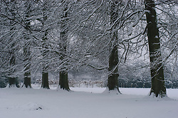 Gooilust Winter, koud, cold snow, sneeuw, winter, cold, wit, white
