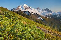 Mount Baker seen from Skyline Divide, Mount Baker Wilderness, North Cascades Washington