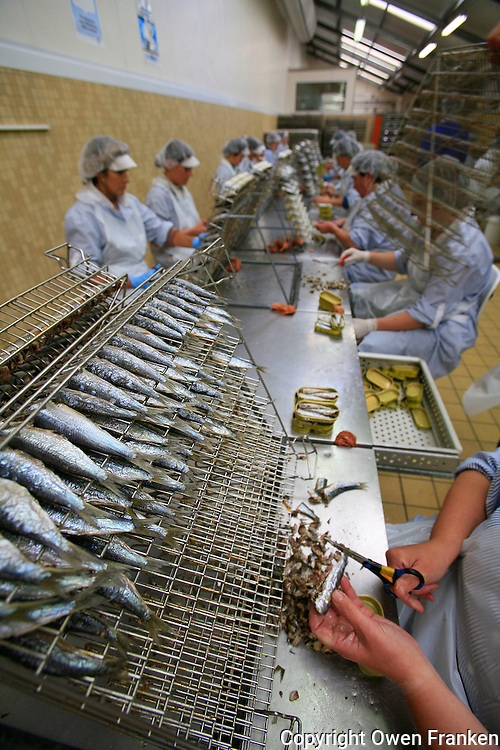 packing sardines at the factory of La Quiberonnaise, considered the best conserves of Quiberon...photo by Owen Franken for the NY Times..July 8, 2008..