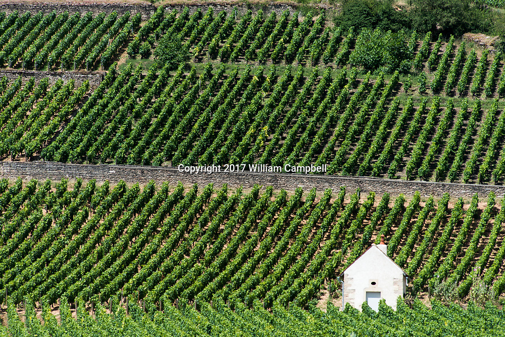 Grand Cru vineyards near the French village Aloxe-Corton which has 13 Grand Cru Climates in the wine region of Burgundy.