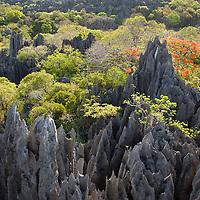 Ankarana Tsingy, Madagascar