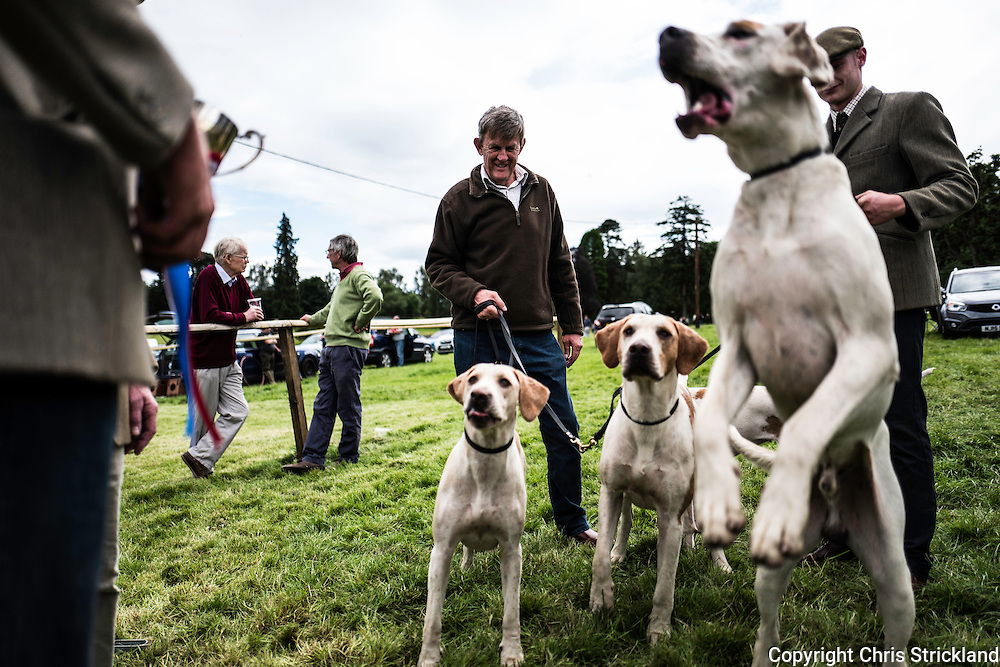 Bedrule, Bonchester Bridge, Hawick, UK. 31st July 2016. Jedforest Hunt Hound, Terrier & Lurcher Show.