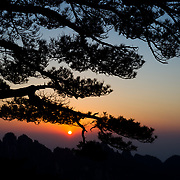Huangshan pine trees and granite spires are silhouetted against a hazy atmosphere in Huang Shan China.
