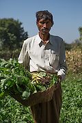 Dansingh holding a basket of vegetables on his farm, Sendhwa, India.<br /> <br /> Dansingh has recently made the switch from conventional cotton farming to organic.<br /> <br /> He can remember his father used to farm organic cotton.