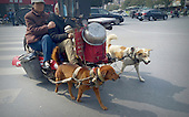 Old Couple Ride Dog-drawn Cart