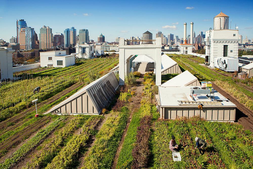 View of the rooftop farm, Grange Farm, wth Manhattan skyline n the background