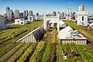 View of the rooftop farm, Grange Farm, wth Manhattan skyline n the background