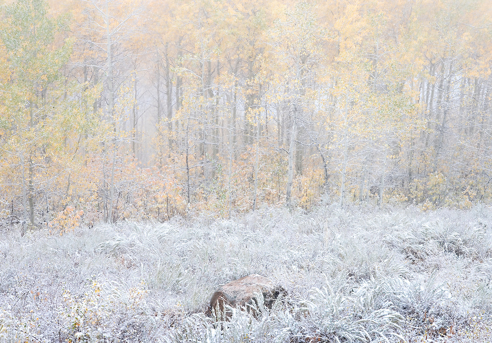 Snow on Autumn Forest and Sagebrush Meadow, Grand Targhee, Idaho