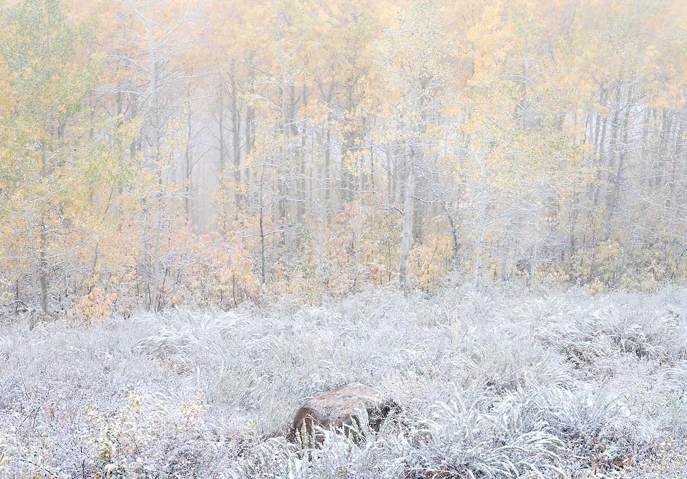 Snow on Autumn Forest and Sagebrush Meadow, Grand Targhee, Idaho