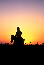 Silhouette of a man riding a horse at sunset