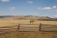 Mongolia. nomads cattle breeders near Bayanchandmani village / eleveurs nomade dans la steppe pres de Bayanchandmani  Mongolie