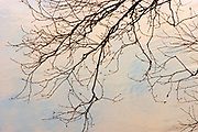 Branches of tree and  Seine River at sunrise<br />