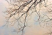 Branches of tree and  Seine River at sunrise<br />Near Mine Centre<br />Ontario<br />Canada