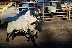 "A yoiung contestant shows his determination at the ""Mutton Bustin"" contest at the 102nd California Rodeo Salinas, which opened July 19 for a four-day run."