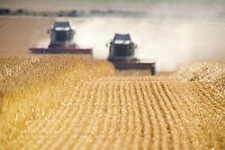 July 21, 2019 - Combines Harvesting Field, North Yorkshire, England (Credit Image: © John Short/Design Pics via ZUMA Wire)