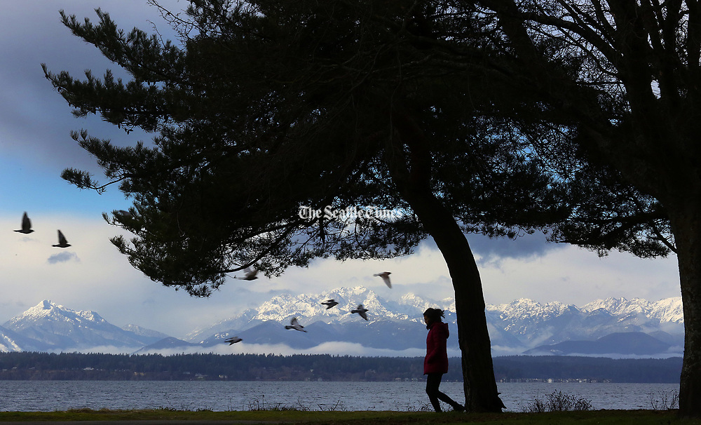 A tranquil scene at Golden Gardens Park includes fresh snow on the Olympic Mountains and not a drop of rain in sight here in Seattle. (Ken Lambert / The Seattle Times)
