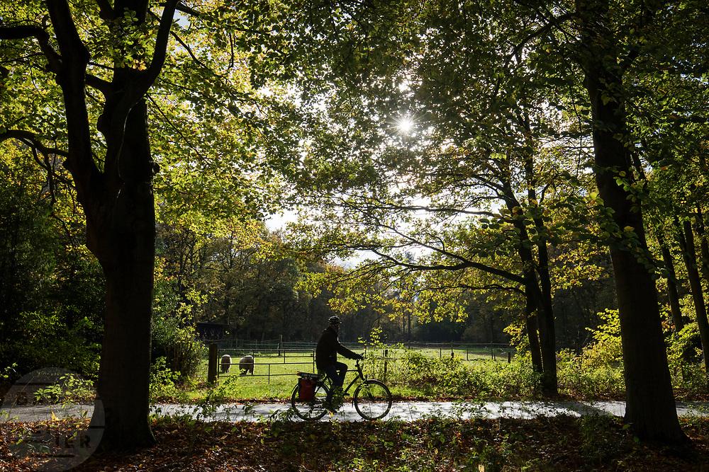 In Woudenberg rijdt een fietser door het natuurgebied De Treek.<br /> <br /> In Woudenberg a cyclists ride at the Treek.
