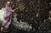 A woman dries buffalo dung, which will be used to fuel a cooking fire, by spreading it on a wall in Khairo Dero village, in Larkana, Pakistan, on Thursday, Jan. 24, 2008. Pakistan is seeking to sustain growth in a country where the government estimates a fourth of the population lives in poverty, or on less than a dollar a day.