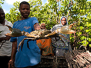 Mfaume Mohammed inspects a crab farmed with the guidance of Kenyan VSO volunteer Maurice Kwame Nyambok This crab fattening project will give the local village community a chance to access the tourism market on Zanzibar, Tanzania.  Currently Zanzibars hotels import 80 % of their produce and so opening up the market to the locals will help generate a vital income
