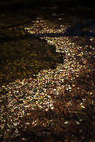 Fallen leaves on water create the illusion of a path.