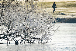© Licensed to London News Pictures. 31/01/2019. London, UK. A frost covered tree dips its branches into a frozen Pen Ponds in Richmond Park after a night of sub zero temperatures. More snow is expected in the south overnight tonight. Photo credit: Peter Macdiarmid/LNP