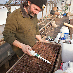 Planting onion seeds in a greenhouse in South Hampton, New Hampshire. Heron Pond Farm greenhouse.  February.