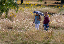 © Licensed to London News Pictures. 17/07/2020. London, UK. Walkers use an umbrella as they enjoy a walk through fields in Richmond Park as weather forecasters predict 28c for the end to the week but with rain on Sunday. As Prime Minister Boris Johnson calls for Britons to return to working in offices to help local service industries and the economic recovery. Photo credit: Alex Lentati/LNP