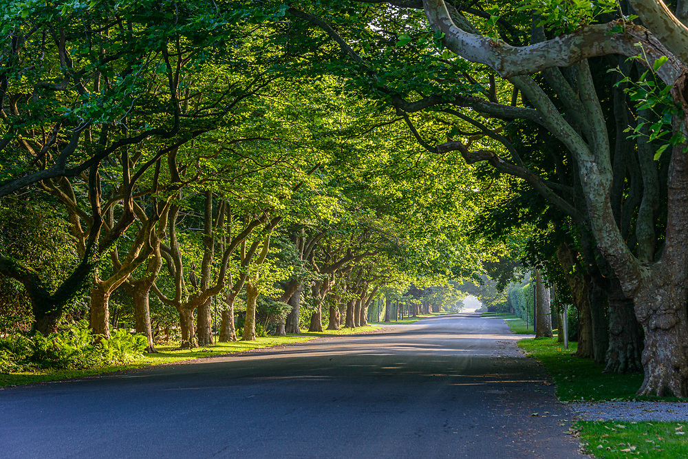 Tree Covered Street, Lily Pond Ln, East Hampton,Long Island, NY