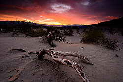 Death Valley National Park is a favorite for landscape photographers, particularly at sunrise and sunset. Here the sun rises in a blaze of color above the sand at the Mesquite Flat Sand Dunes. The Mesquite Flat Sand Dunes located in Death Valley National Park near Stovepipe Wells, is the largest dune field in the park. While the sand dunes appear tall, the highest dune only rises about 100 feet. The Mesquite Sand Dunes are the easiest sand dunes to visit in Death Valley National Park. Three types of dunes are found in the dune field: crescent, linear, and star shaped. The dune field is named for the Mesquite trees that create hummocks that provide places for wildlife to live.<br /> <br /> Death Valley National Park, located in eastern California near the border with Nevada is one of the hottest spots on earth, holding the hottest recorded air temperature of 134 &deg;F. The Park also is location of the lowest spot in North America, 282 feet below sea level at the vast salt flats at Badwater Basin. At 3.4 million acres, the park is the largest national park in the contiguous United States. Death Valley National Park sits between the Panamint Range on the west  and Amargosa Range on the east.